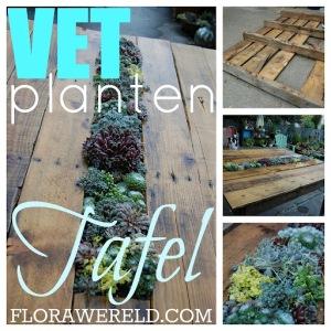 De Vetplanten-tafel om zelf te maken.