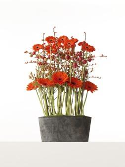 Gerbera in a modern arrangement.
