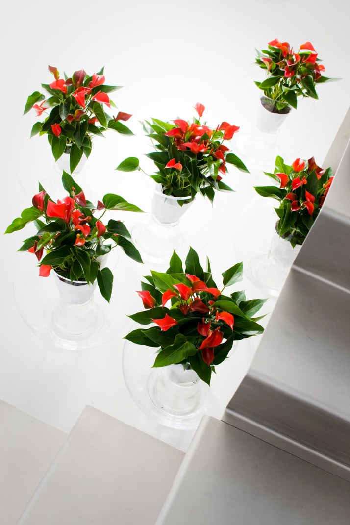 Indoor or decor potted plant society - Indoor potted flowers ...