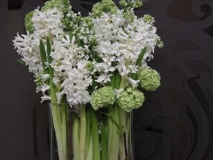 paralel arrangement with Hyacinth and Viburnum