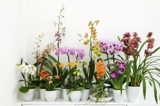 A Great collection of Orchids for in your home.