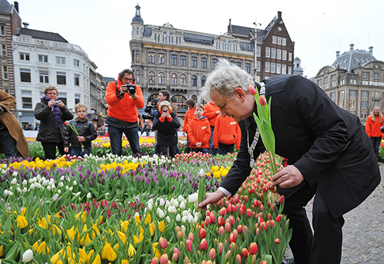 Mayor of Amsterdam picks his Tulips