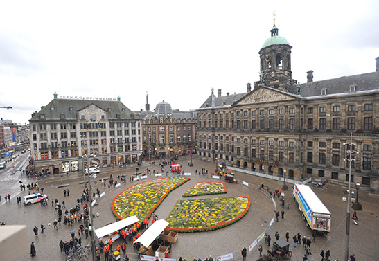 200.000 tulips from Amsterdam