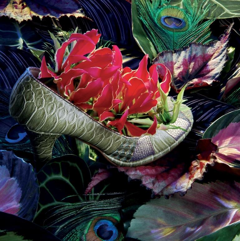 Gloriosa and Begonia