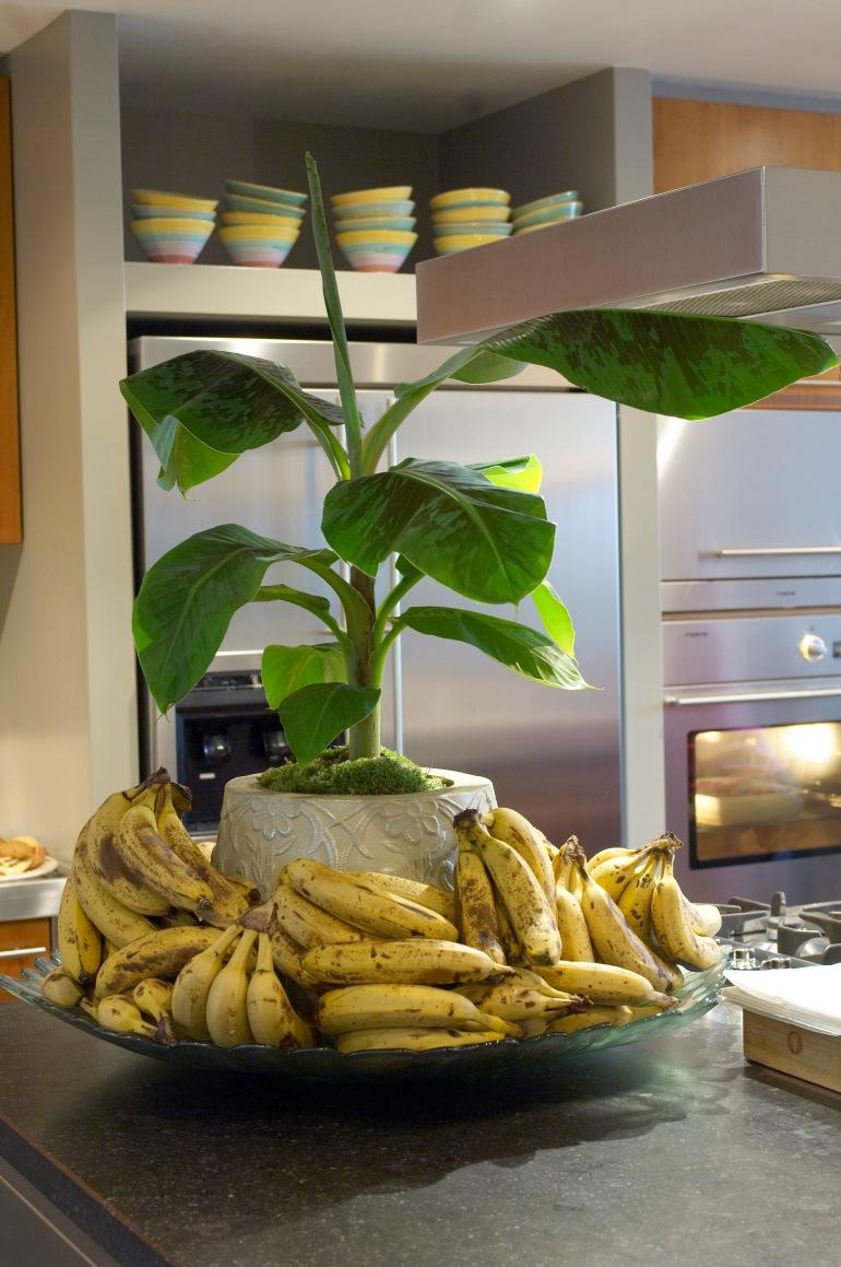 Musa ( Banana plant )