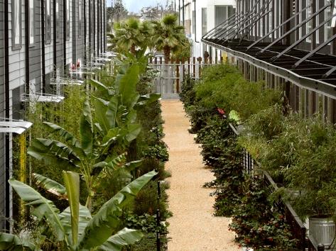 The Grove is an external linear courtyard