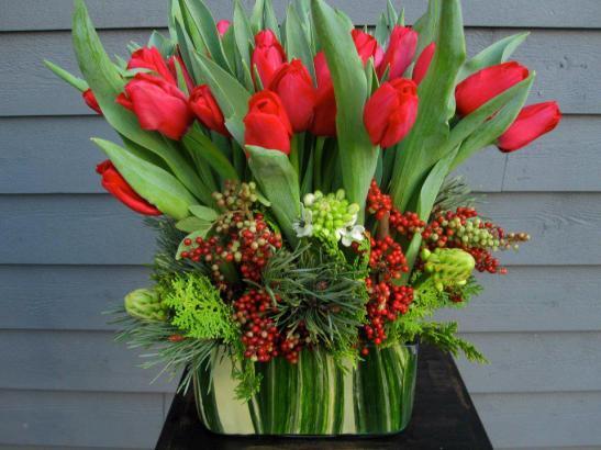 Tulips drom Amsterdam