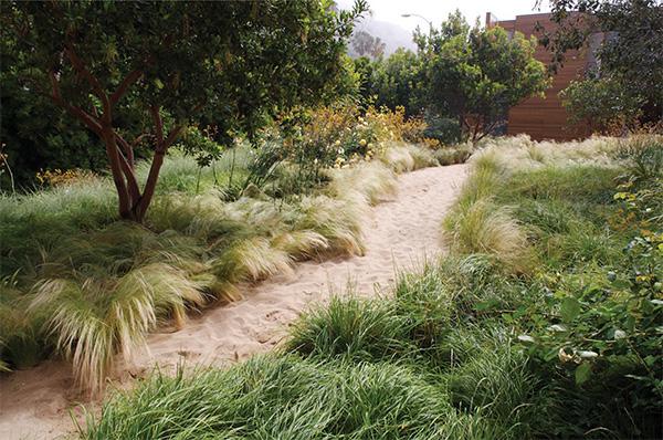 pamela-burton-award-landscape-5