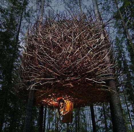 The Bird-nest