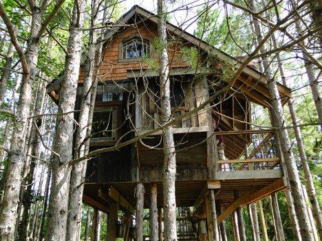 tree-house-1 (1)