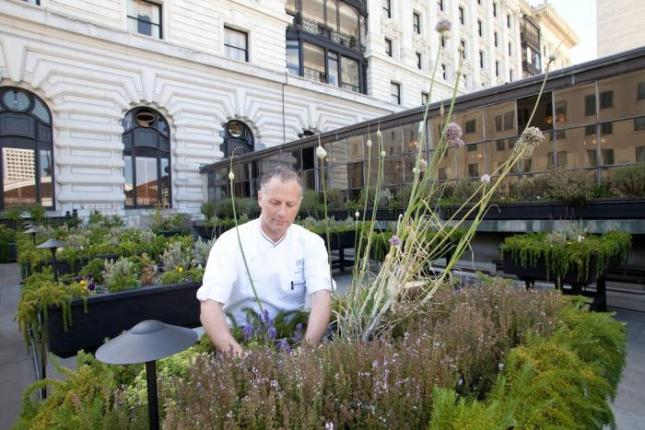 Chef J.W Foster in his Roof Herb Garden.
