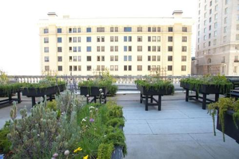 The raised beds on top of the San Francisco Fairmount Hotel.