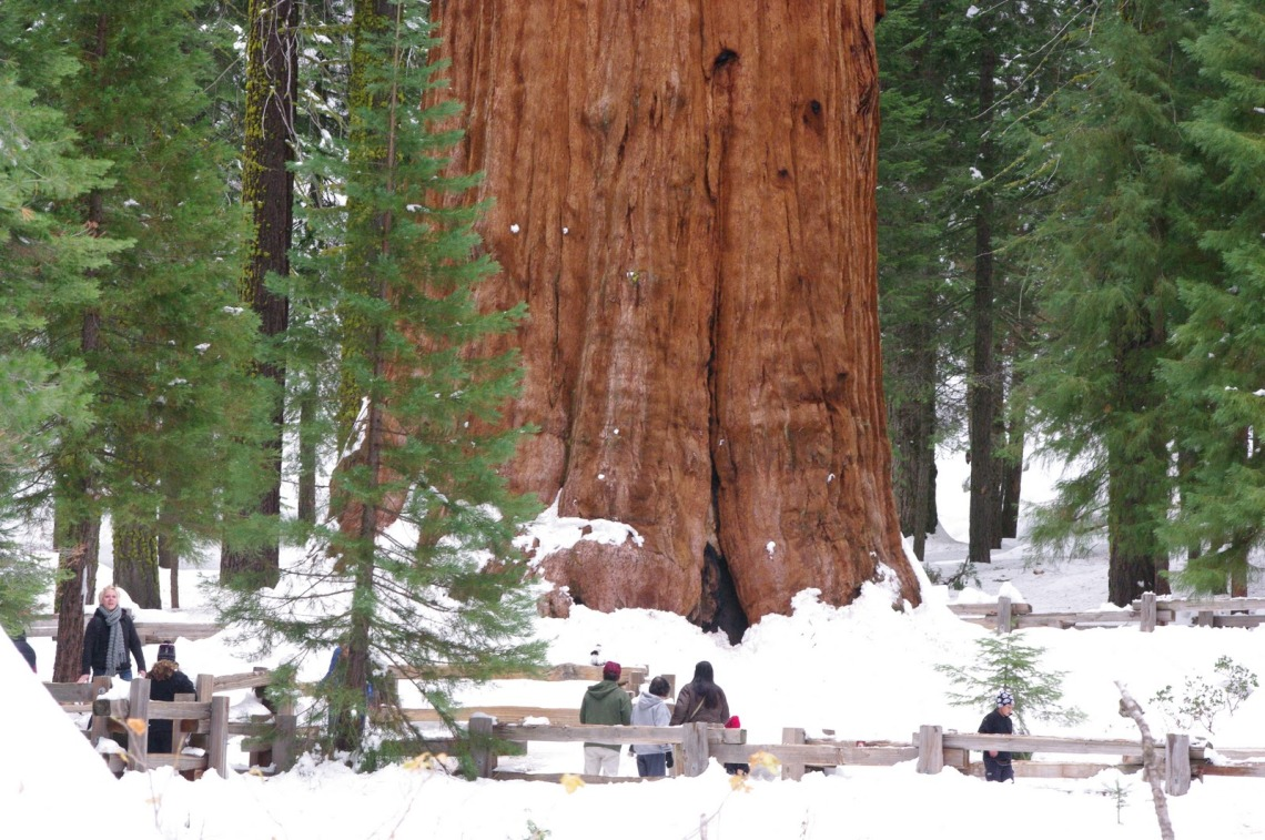 The proud General Sherman is at risk!