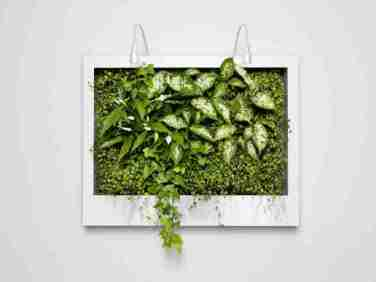 A Vertical garden brings nature to your wall,big or small