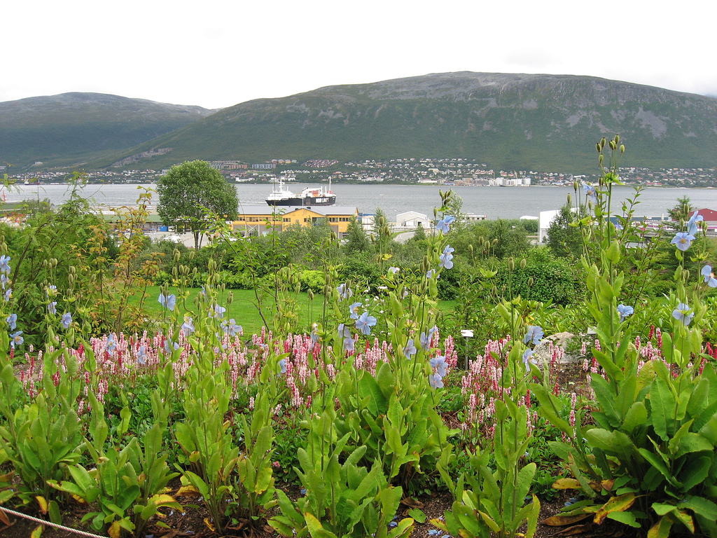 A view at the Tromso area