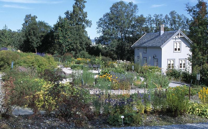 Tromso-Norway Botanical Garden