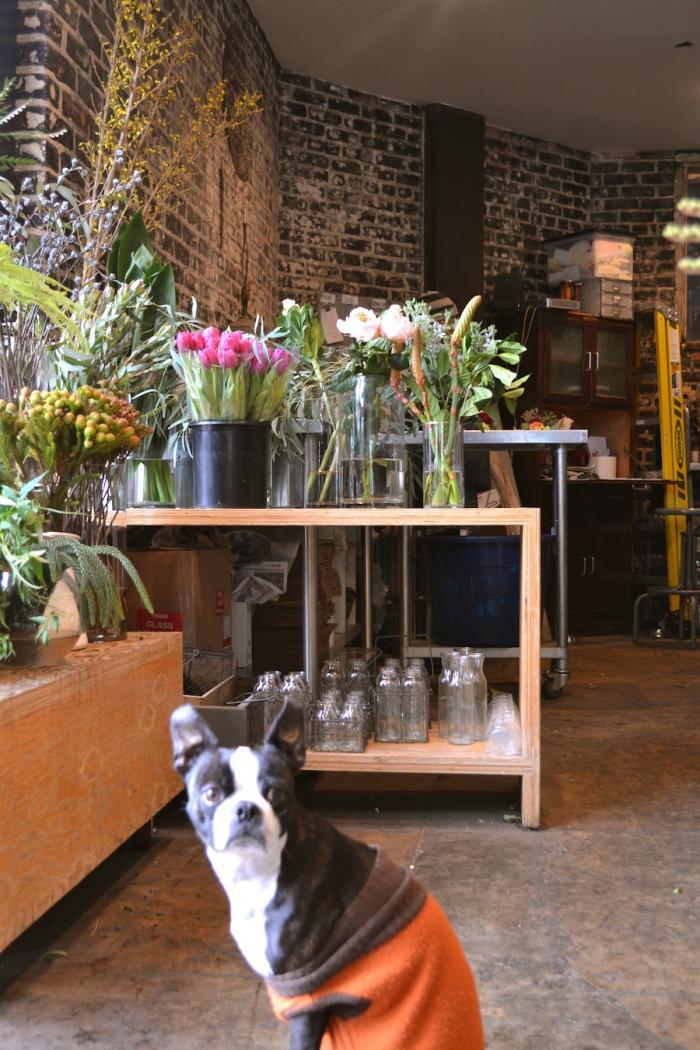 700_clementine-floral-works-dog
