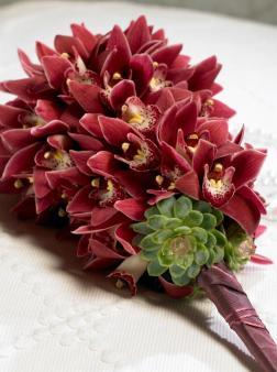 Cymbidium-orchids