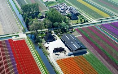 tulips-barn_2470254k