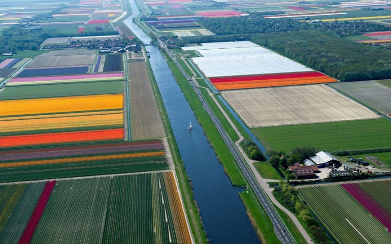 tulips-canal_2470263k