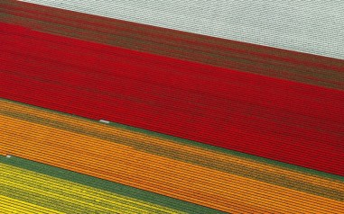 tulips-close-up_2470258k