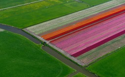 tulips-pink_2470277k