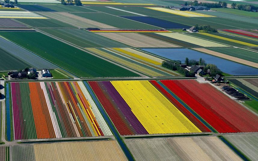 tulips-rainbow_2470256k