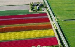 tulips-red-yellow_2470261k