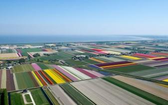 tulips-sea_2470262k