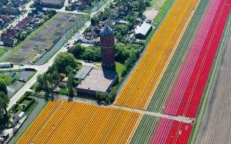 tulips-tower_2470268k