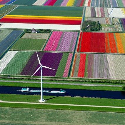 tulips-turbines_2470266k
