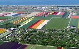 tulips-village_2470267k