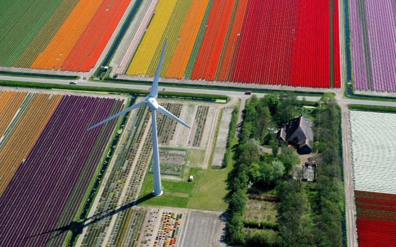 tulips-windmill_2470269k