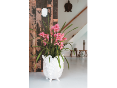 Strong Cymbidium Orchids