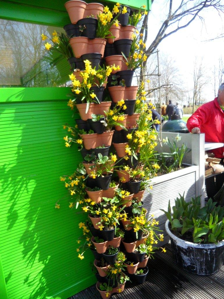 The vertical bulb garden with Narcissus 'Teté a Teté.