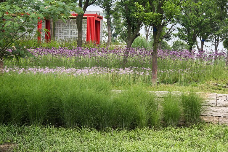 Lotus-Lake-Park_IPD_Kunshan_10