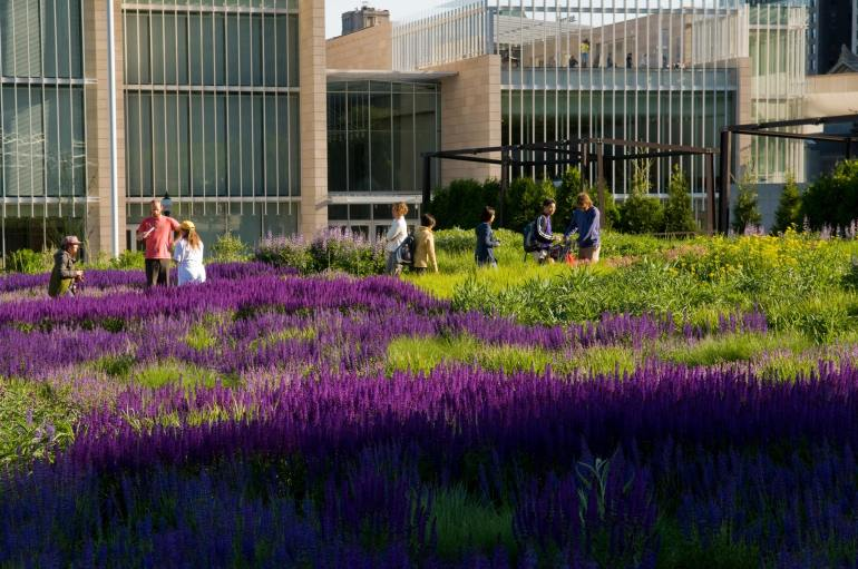 Lurie Garden Chicago,the Salvia River by Piet Oudolf.