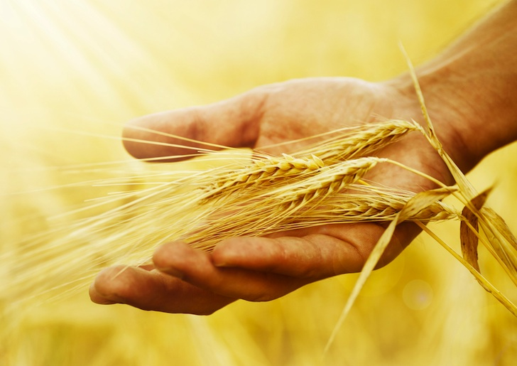 Wheat-in-hand