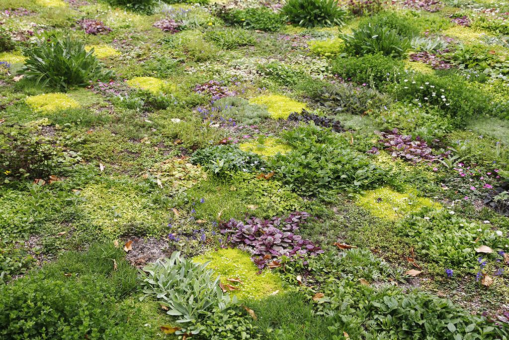 Landscape Garden Avondale : Avondale park london floral lawn florafocus