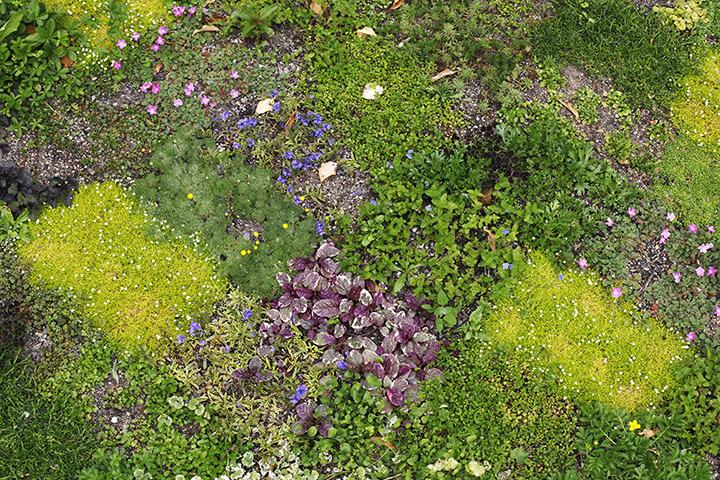 Floral lawn at Avondale Park, London
