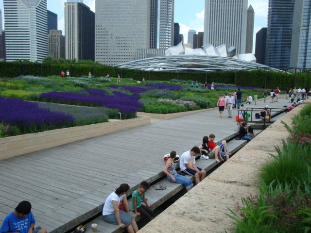 Lurie Garden with the famous Salvia River.