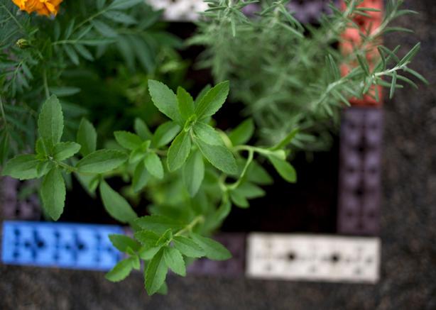 togetherfarm-plant