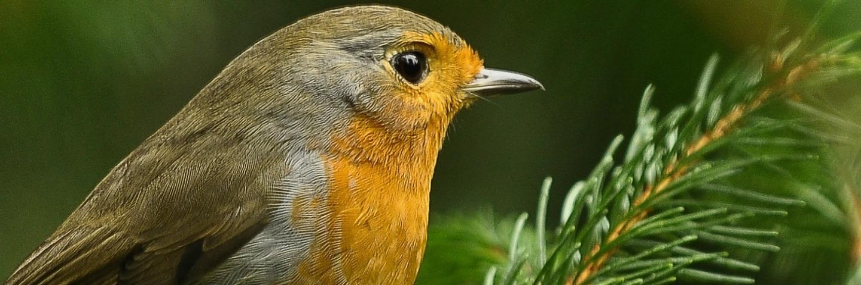 vogelheader