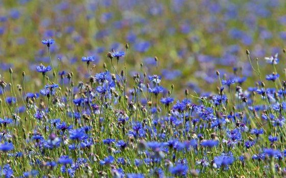 meadow23